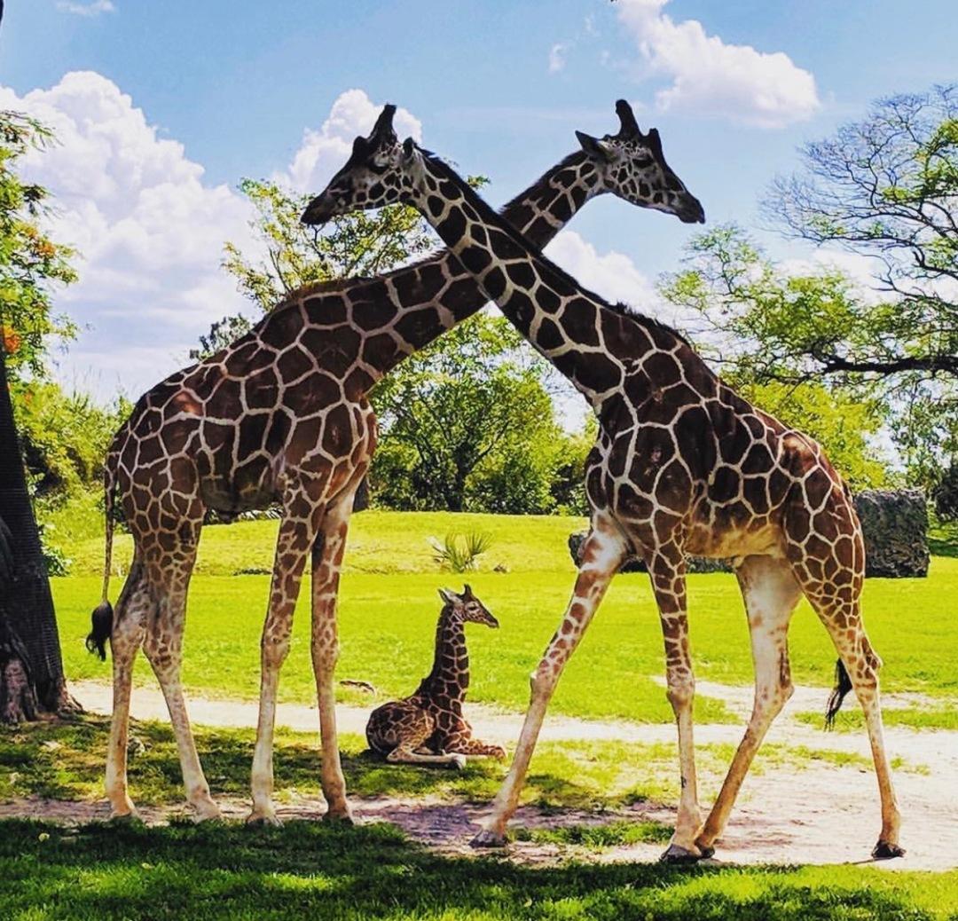Domingo de celebración Zoo Miami